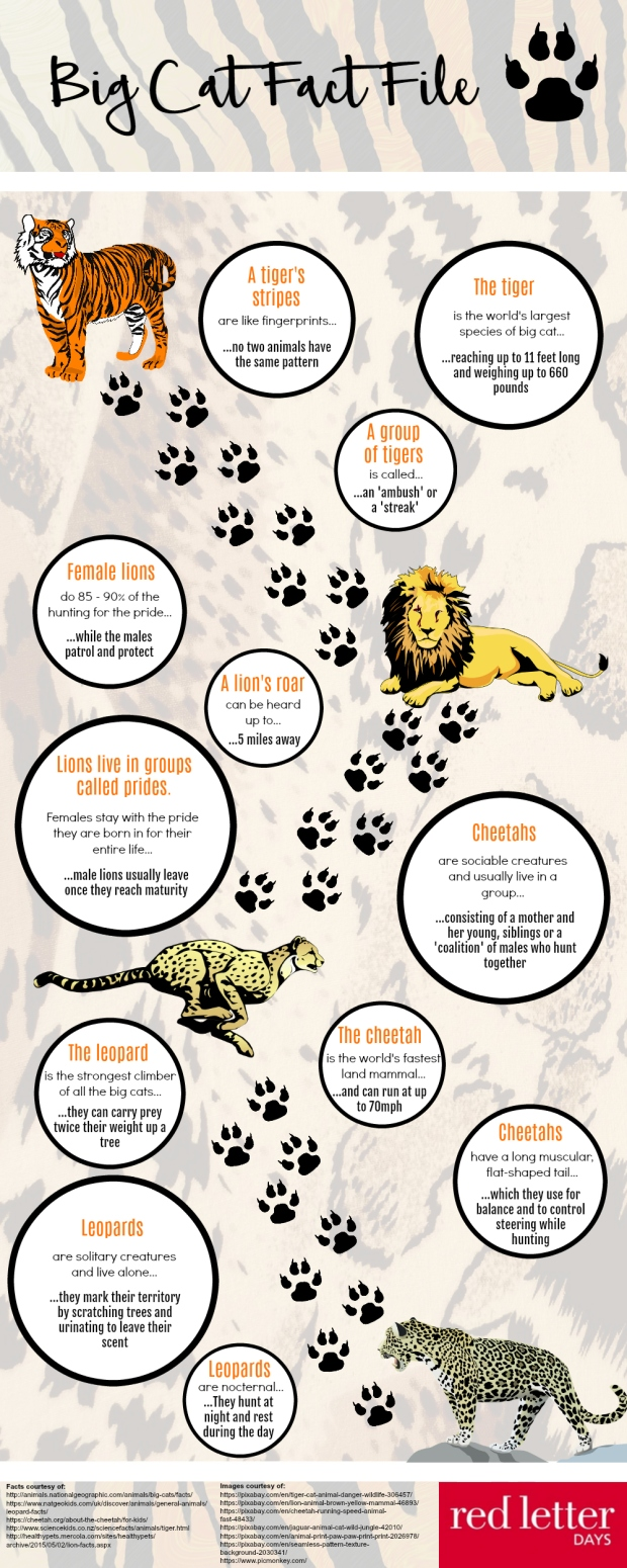 Big cat facts infographic